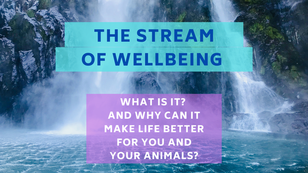 Conversations with Coryelle- The Stream of wellbeing Image
