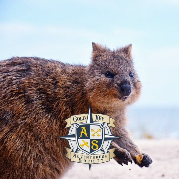 2020 Travel Trends Part 3: Rise of the Quokka Image