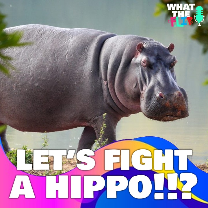 083 - Let's Fight - A Hippo!