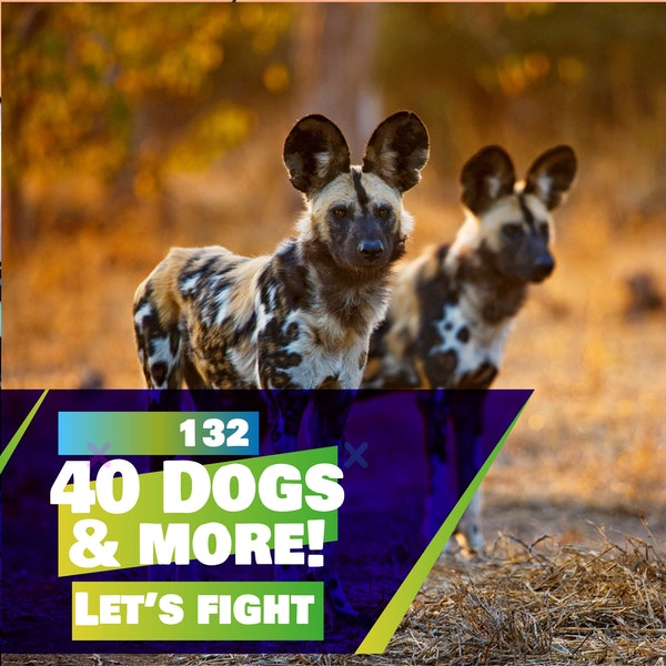 132 - Let's Fight - 40 Dogs, and a heated argument between Alex and Louis about the moon!?? (SPECIAL)
