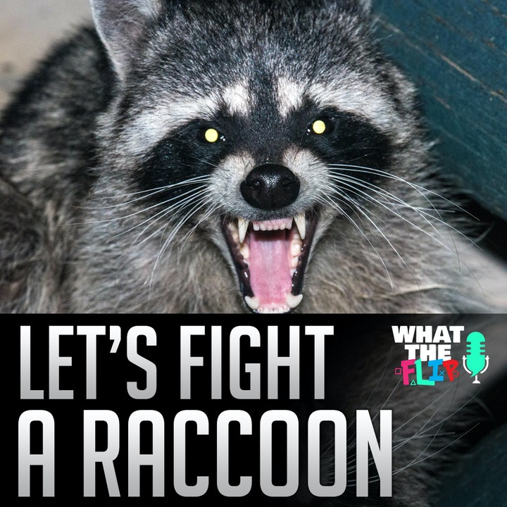 017 - Let's Fight - a Raccoon!?