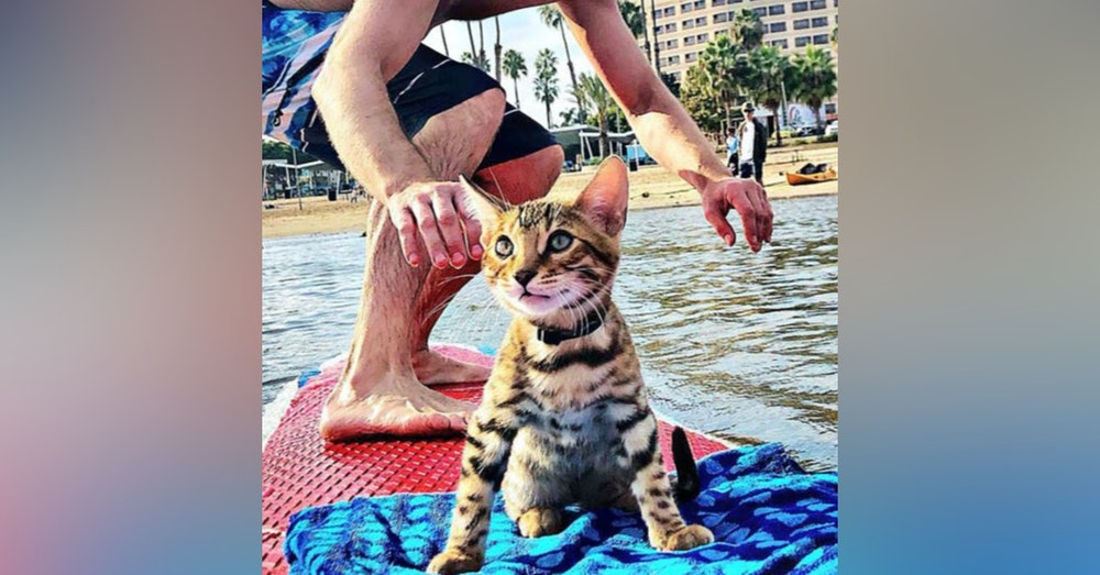 SurferCat Maverick and his parents Kayla and Nick talk about Mental Health Wellness and Community