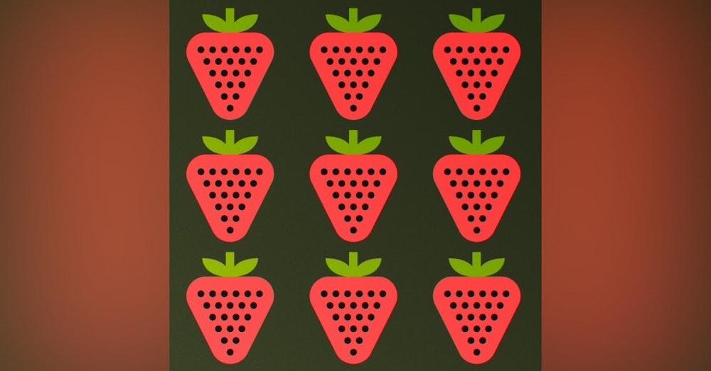 Rameneurs et sucreurs de fraises - Plougastel Daoulas (Années 1961/62 - Finistère - Bretagne - France)