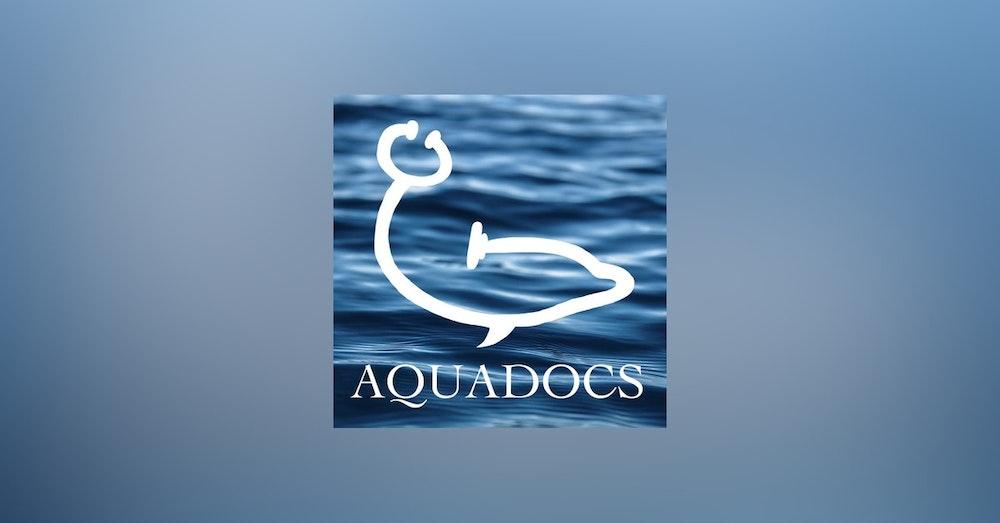 Coming Soon! Aquadocs Season 2