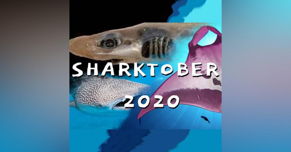 Sharktober 2020 with Melissa Cristina Márquez