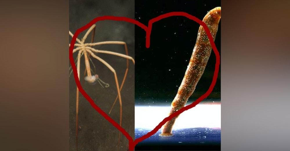 Ocean Lovin' 2 - A Pycnogonid and Leech Love Story