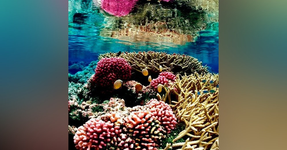 Can We Save Coral from Bleaching?