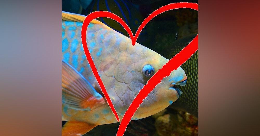 Ocean Lovin' 2 - Parrotfish