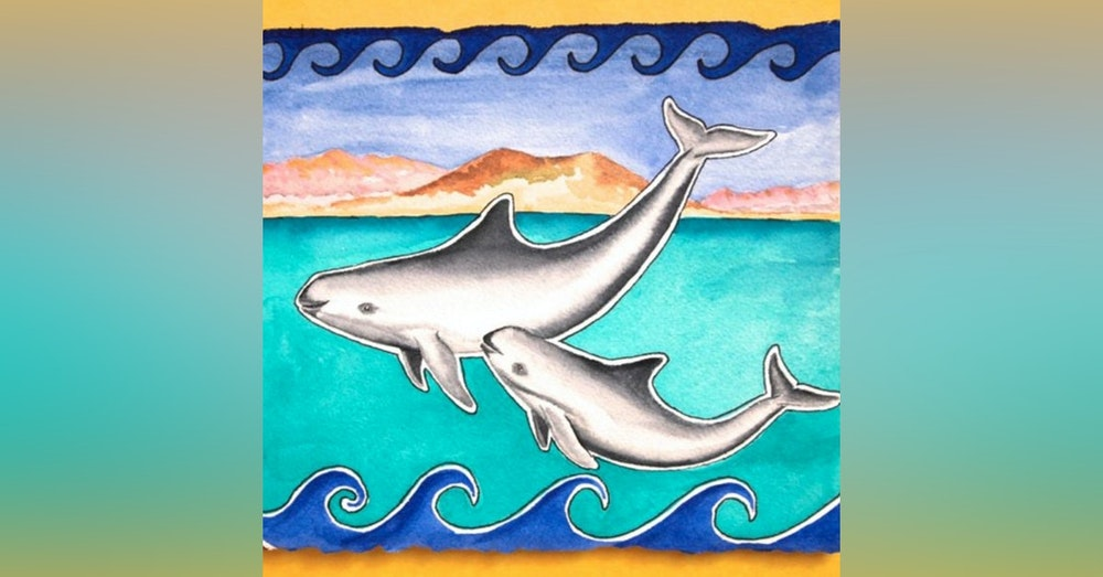 Vaquitas - the Quickly Vanishing Dolphins