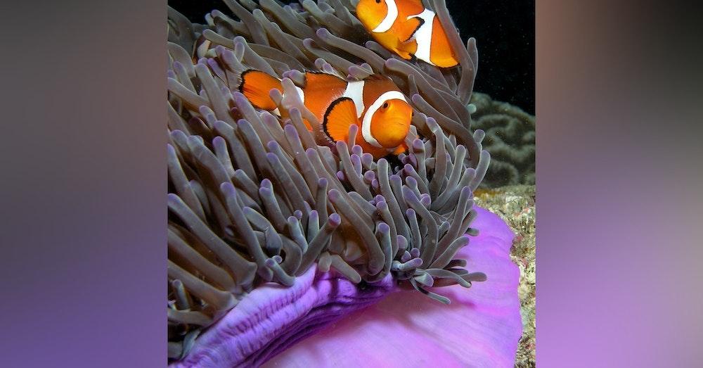 Ocean Lovin' 2 - Clownfish