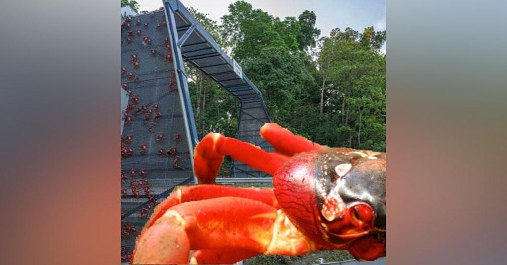 Christmas Island Crab Bridge