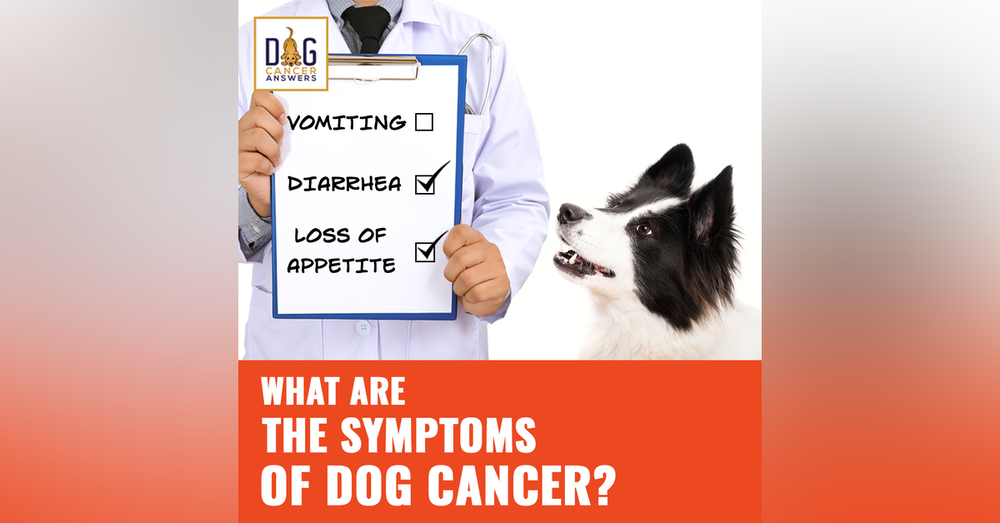What Are the Symptoms of Dog Cancer? │ Dr. Demian Dressler Q&A