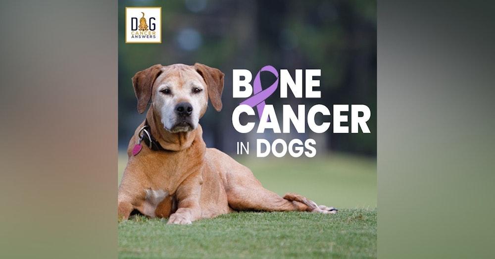 Dog Bone Cancer – Symptoms & Amputation & Treatments   Dr. Demian Dressler Q&A