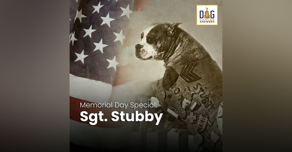 Memorial Day Special:  Sgt. Stubby, American War Hero | JT Doyle & Ann Bausum