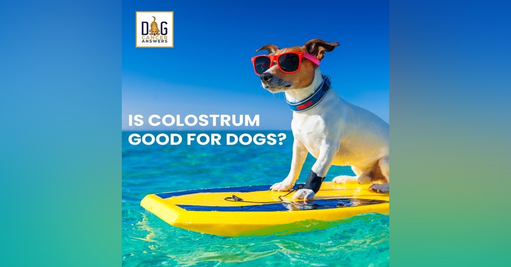 Is Colostrum Good for Dogs? │ Dr. Nancy Reese Q&A