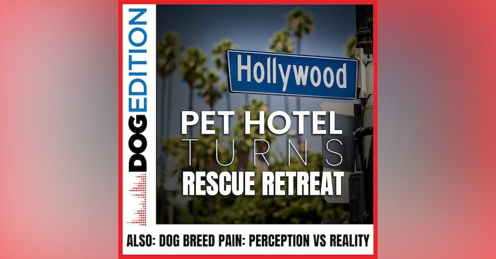 Hollywood Pet Hotel Turns Rescue Retreat | Dog Breed Pain: Perception vs Reality | Dog Edition #21