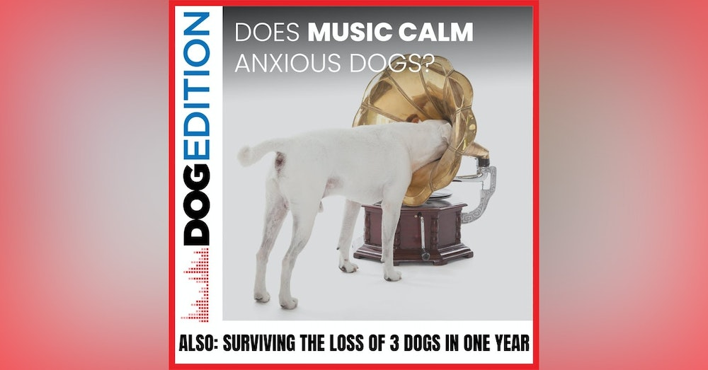 Can Music Calm an Anxious Dog   Surviving the Loss of Three Dogs in A Year   Dog Edition #18