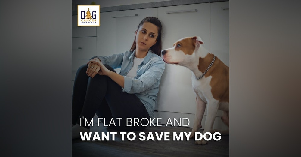 I'm Flat Broke ... And I Want to Save My Dog! │ Molly Jacobson Deep Dive