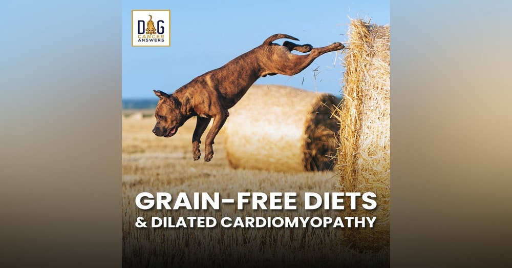 Grain Free Diets and Dilated Cardiomyopathy | Dr. Nancy Reese, DVM, PhD and Dr. Kendra Pope, DVM, DACVIM Deep Dive