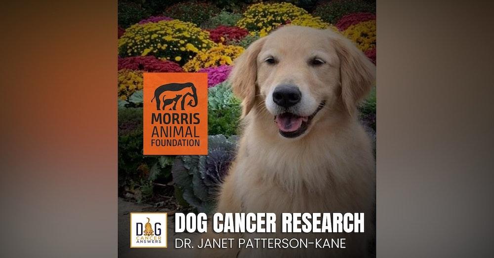 Morris Animal Foundation's Dog Cancer Research | Dr. Janet Patterson-Kane Deep Dive