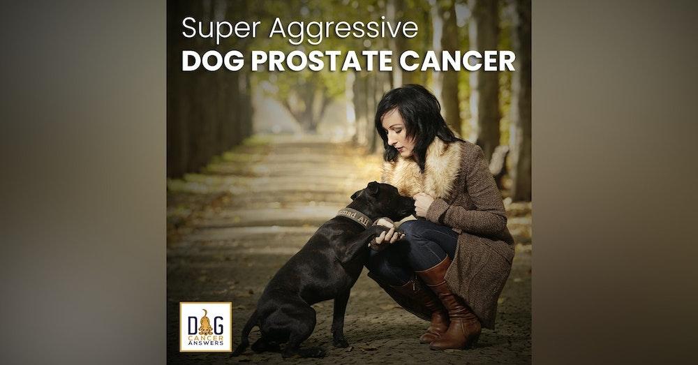 Super Aggressive Dog Prostate Cancer   Dr. Demian Dressler Q&A