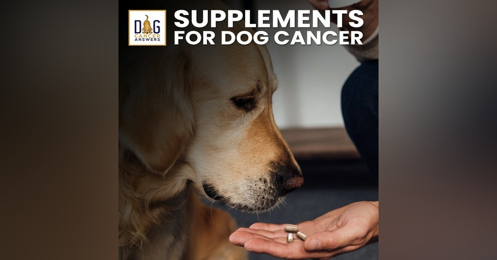 Supplements for Dogs with Cancer   Dr. Demian Dressler Deep Dive
