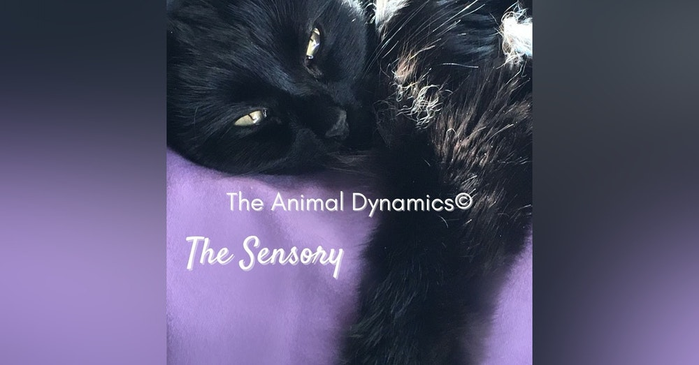 Conversations With Coryelle- Animal Dynamic's The Sensory