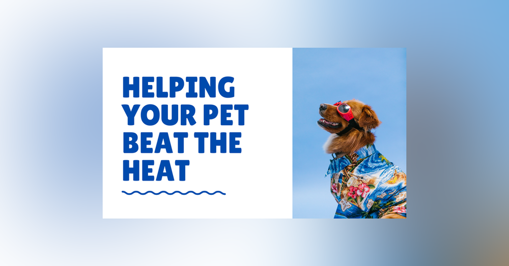 Conversation With Coryelle- Beat the Heat with your animals