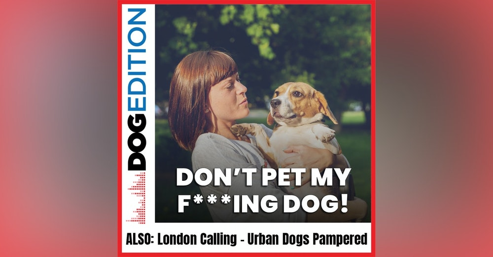 Don't Pet My F***ing Dog | London Calling: Urban Dogs Pampered | Dog Edition #17