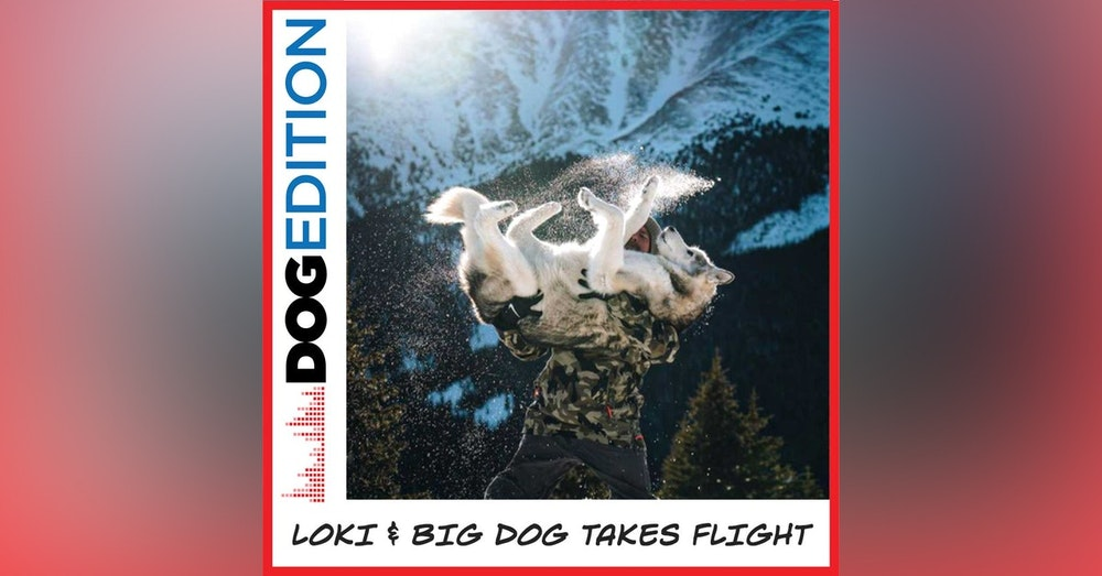 Loki & Big Dog Takes Flight