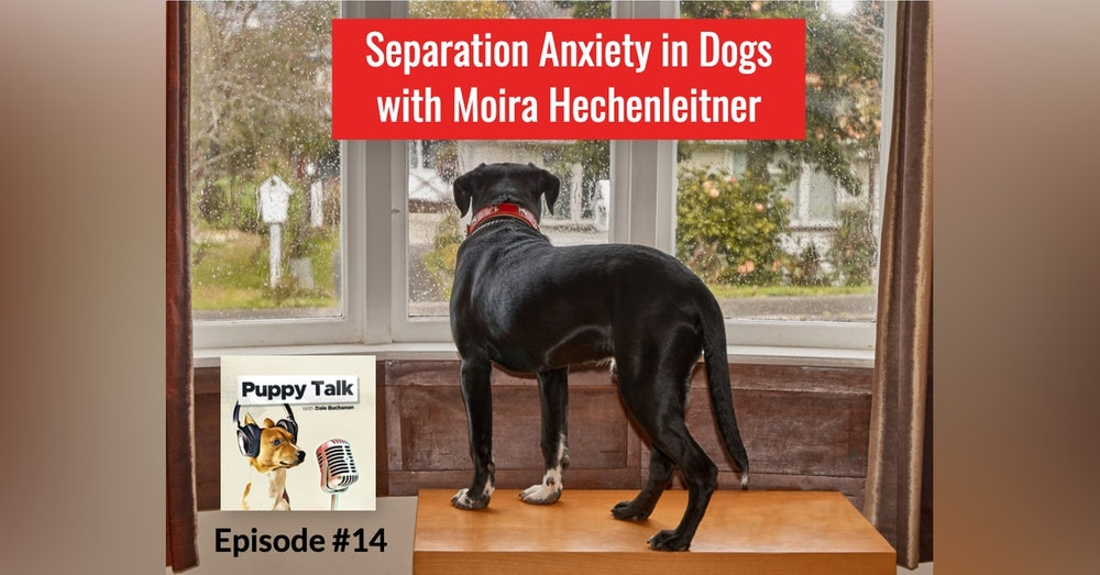 Separation Anxiety with Moira Hechenleitner