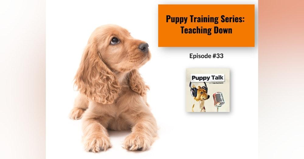 Puppy Training Series: Teaching Down