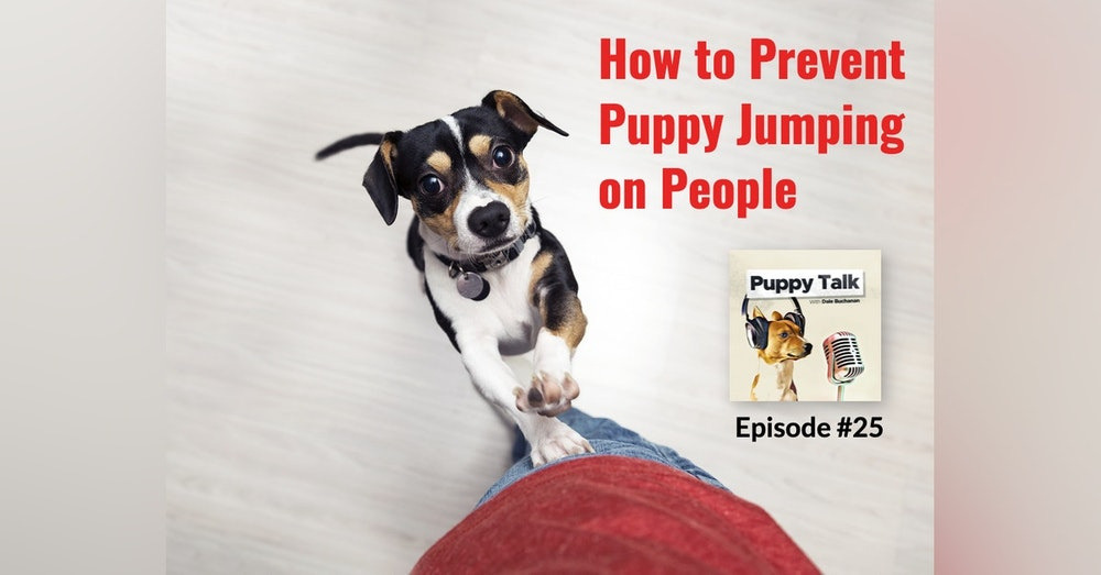 How to Prevent Puppy Jumping on People