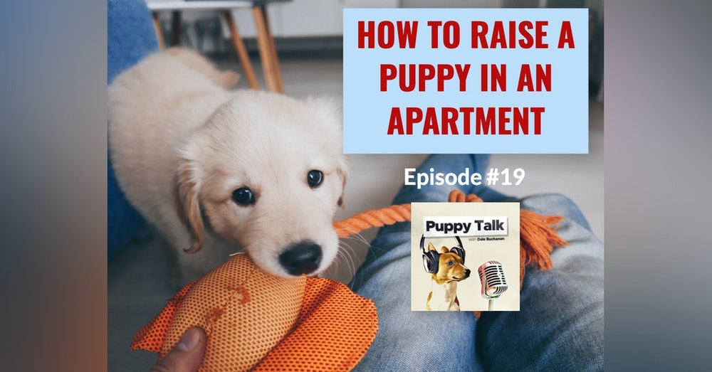 How to Raise a Puppy in an Apartment