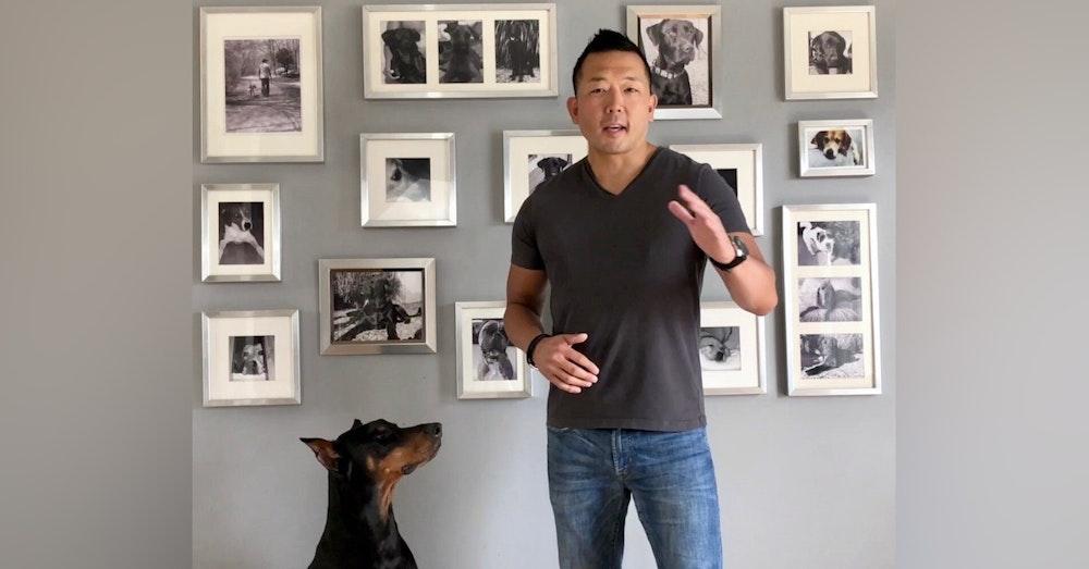 Preventing Puppy Aggression with Michael Shikashio