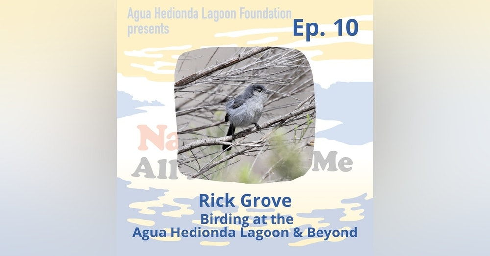 Ep. 10 Birding at the Agua Hedionda Lagoon & Beyond
