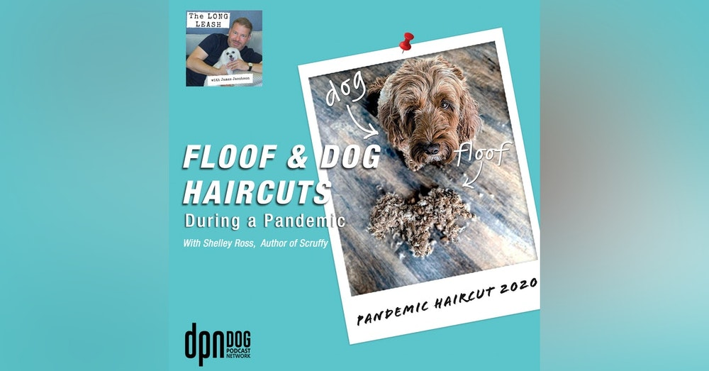 Floof & Dog Haircuts During a Pandemic | The Long Leash #3