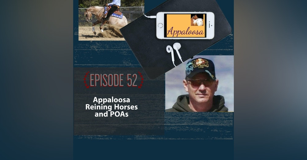 Appaloosa Reining Horses and POAs
