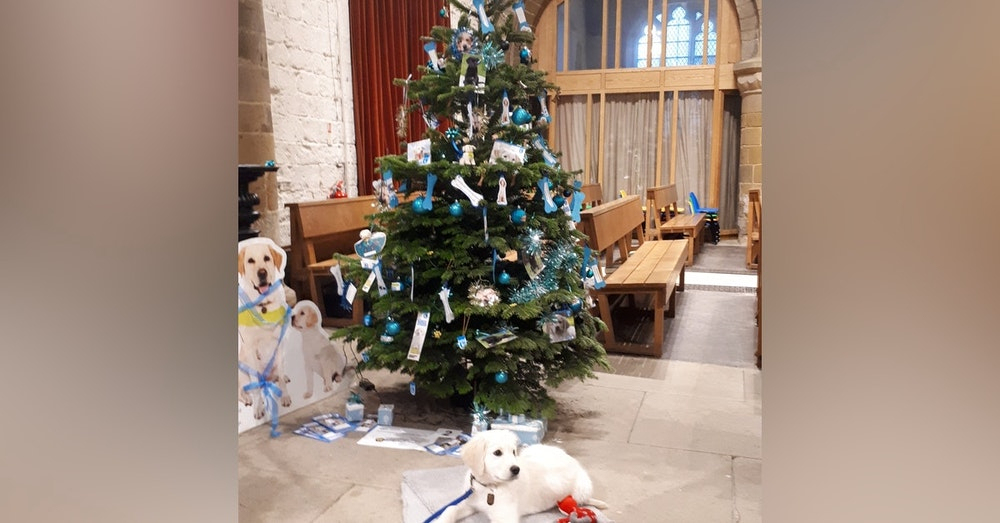#027 Guide Dog Puppy Walkers - socialisation training