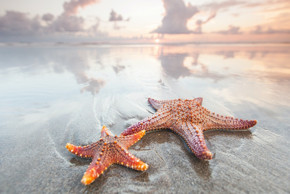 Closing Thought of the Week: Tale of the Starfish - E26