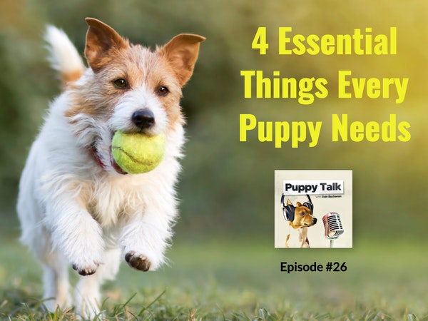 4 Essential Things Every Puppy Needs