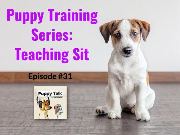 Puppy Training Series: Teaching Sit