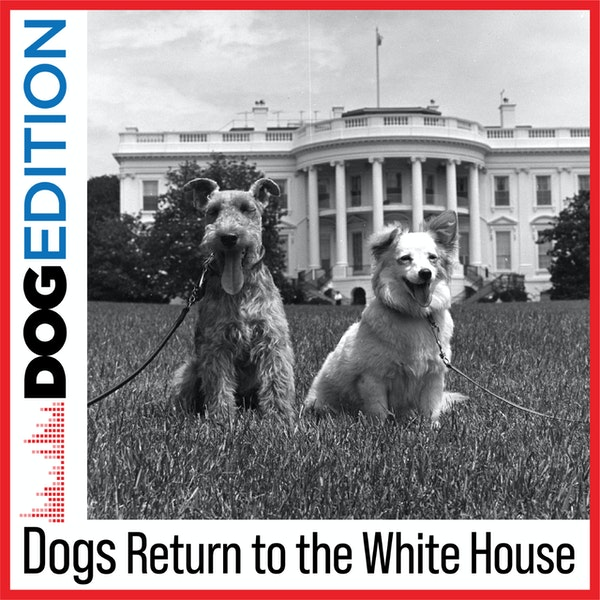 Dogs Return to the White House