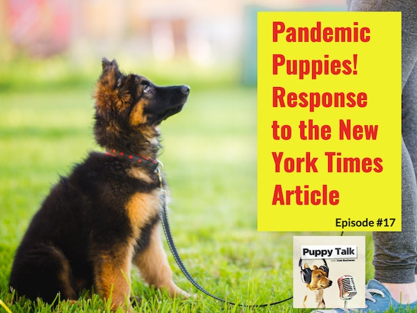Pandemic Puppies - Response to the New York Times Article