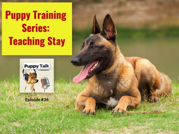 Puppy Training Series: Teaching Stay