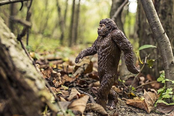 The Hunt for Sasquatch