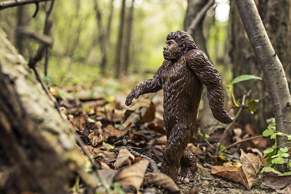 The Hunt for Sasquatch Image