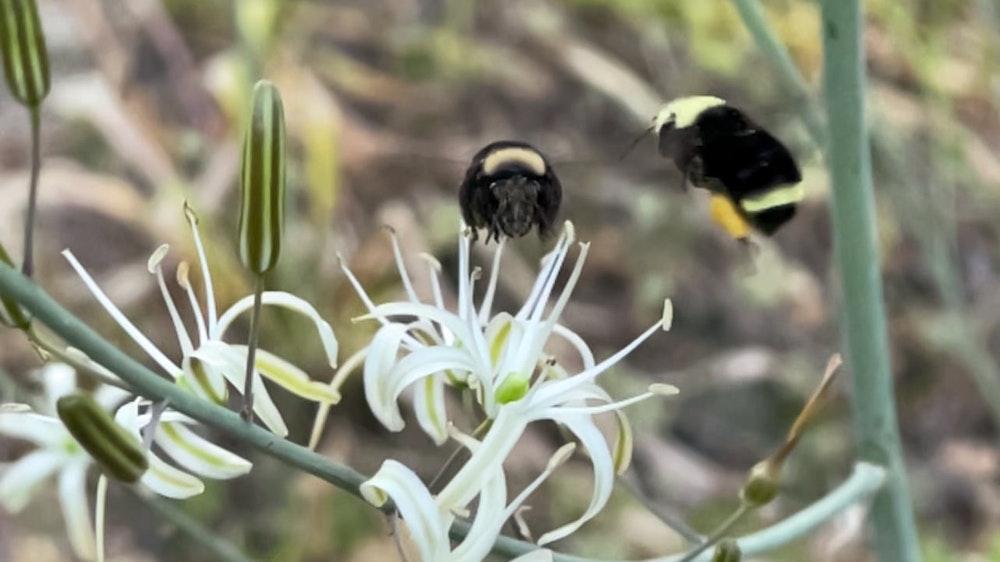 bumble bees & tiktoks