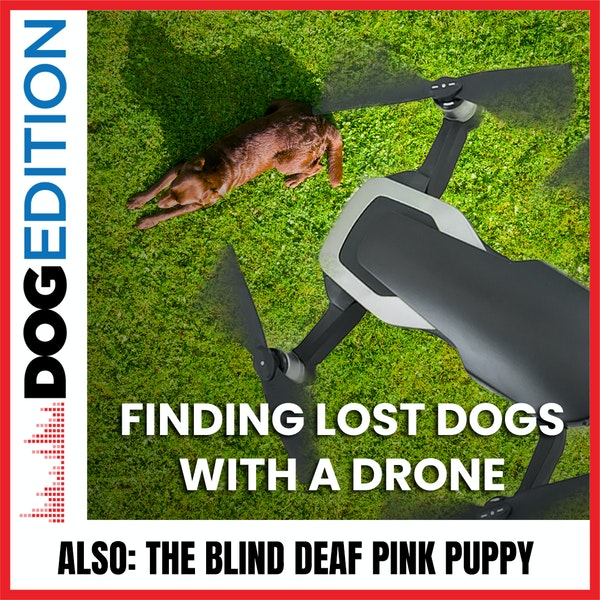 Finding Lost Dogs With A Drone   The Blind Deaf Pink Puppy   Dog Edition #37