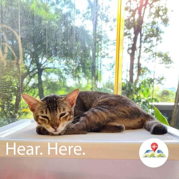 618643 Singapura Cat